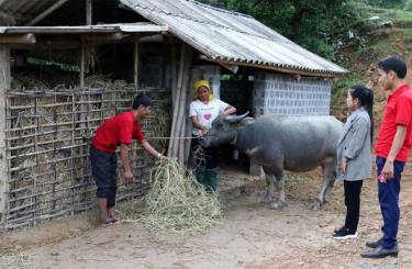 Cán bộ xã Túc Đán kiểm tra việc dự trữ rơm khô cho trâu, bò tại hộ ông Lường Văn Xết, thôn Pa Te.