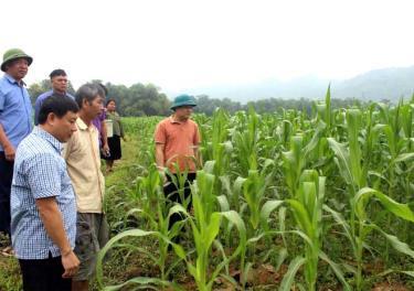 Lãnh đạo huyện Lục Yên kiểm tra sản xuất vụ đông tại xã Lâm Thượng.