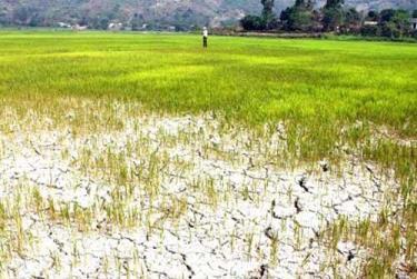 Một số vùng ở Lào bị hạn hán.