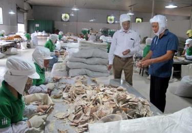 Giám đốc Công ty cổ phần Yên Thành, huyện Yên Bình (bên phải) kiểm tra chất lượng măng xuất khẩu.