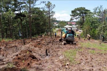 """Ngày 15-10-2019, chính quyền thành phố Đà Lạt và đơn vị chủ rừng bắt đầu triển khai trồng lại rừng thông trên đồi Robin và 2 địa điểm khác tại khu vực phường 3, thành phố Đà Lạt (Lâm Đồng). Đây là khu vực đã bị một đối tượng tự ý """"quy hoạch"""", phá rừng lấn chiếm đất để phân lô bán nền, bị chính quyền địa phương tổ chức giải tỏa nóng vào ngày 10-10-2019 vừa qua."""