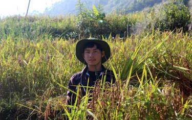 Chớ A Dê, thôn Sáng Pao, xã Xà Hồ đang thành công với mô hình trồng lúa nếp cẩm.