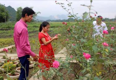 Giấc mơ nông nghiệp công nghệ cao của Nông Thị Thắm còn xa vời vì thiếu vốn.