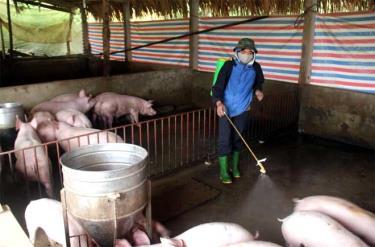Phun thuốc tiêu độc khử trùng khu vực chăn nuôi lợn