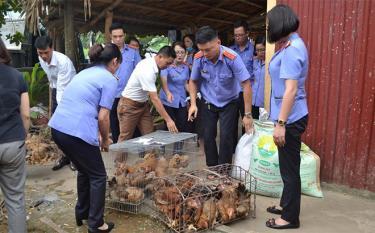 Viện Kiểm sát nhân dân thành phố Yên Bái hỗ trợ gà giống cho các hộ có hoàn cảnh khó khăn của xã Giới Phiên.