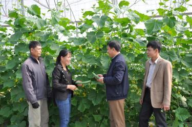 Mô hình trồng rau, củ, quả trong nhà lưới của Hợp tác xã Nông nghiệp dịch vụ hữu cơ Trung Thành đã bước đầu thành công.