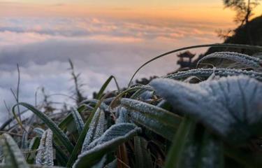 Sương muối phủ trắng trên đỉnh Fansipan.