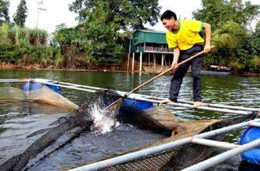 Yên Bình đang phát huy hiệu quả mô hình nuôi thủy sản an toàn