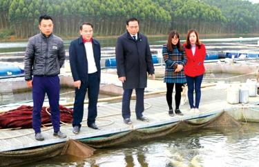 Hết tháng 11/2019, sản lượng khai thác thủy sản của Yên Bình đạt gần 9.000 tấn, bằng 187,2% kế hoạch tỉnh giao.