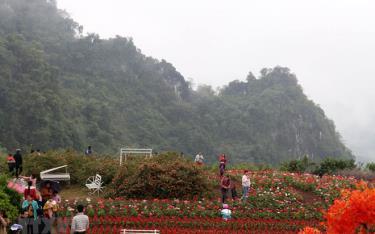 Du khách thăm quan các địa điểm du lịch tại Bình nguyên xanh Khai Trung, xã Khai Trung, huyện Lục Yên.