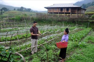 Một trong các mô hình sản xuất rau sạch hiệu quả ở xã Hát Lừu, huyện Trạm Tấu.