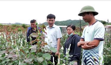 Đồng chí Lê Trọng Khang - Chủ tịch UBND huyện Mù Cang Chải kiểm tra mô hình trồng hoa hồng tại xã Nậm Khắt.