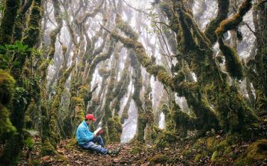 Vẻ đẹp của khu rừng hoang sơ trên đỉnh Tà Chì Nhù, xã Xà Hồ (Ảnh: VT).