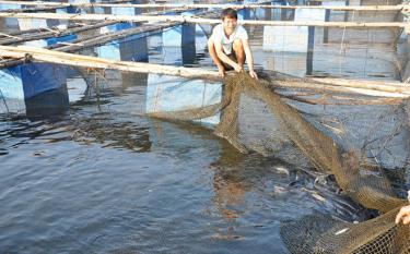 Một mô hình chăn nuôi thủy sản trên hồ Thác Bà.
