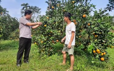 Lãnh đạo xã Mai Sơn kiểm tra tình hình phát triển vùng cây ăn quả có múi trên địa bàn.