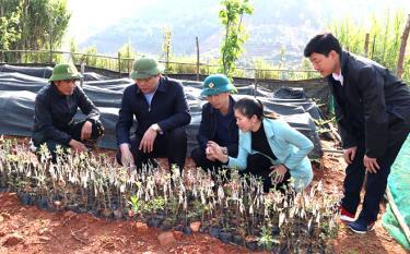 Lãnh đạo huyện Mù Cang Chải kiểm tra vườn ươm cây sơn tra tại xã Lao Chải.