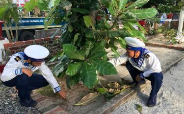 Chiến sĩ trẻ trên đảo chăm sóc cây bàng vuông.