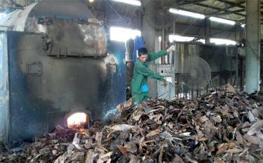 Nông dân vùng quế Văn Yên tận dụng cành lá quế chưng cất tinh dầu mang lại hiệu quả kinh tế cao.
