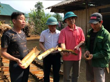 Các đồng chí lãnh đạo xã An Lương, huyện Văn Chấn kiểm tra sản phẩm quế vỏ của người dân địa phương.