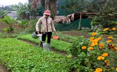 Được giúp đỡ, chị Nông Thị Canh biết thêm kỹ thuật chăm sóc vườn rau nhà mình tốt hơn.