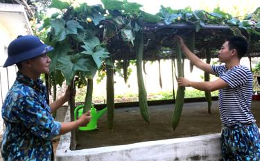 Vượt qua điều kiện thời tiết khắc nghiệt, cán bộ, chiến sĩ trên đảo Sơn Ca vẫn trồng được rau, củ, quả phục vụ công tác hậu cần.