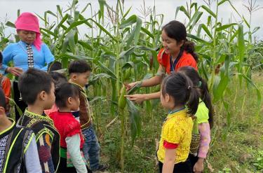 Hoạt động trải nghiệm của các bé Trường Mầm non Hoa Hồng, thị xã Nghĩa Lộ.