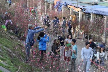 Đào về phố là hình ảnh đẹp, đặc trưng dịp Tết đến xuân về.