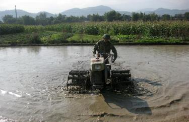 Nông dân thị xã Nghĩa Lộ làm đất gieo cấy lúa xuân.