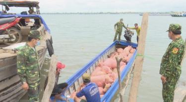 Bộ đội Biên phòng Đồng Tháp phát hiện đối tượng vận chuyển lợn trái phép qua biên giới.