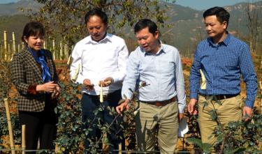 Đồng chí Phó Chủ tịch HĐND tỉnh Hoàng Thị Thanh Bình thăm, kiểm tra một số mô hình phát triển sản xuất nông, lâm nghiệp tiêu biểu trên địa bàn huyện Mù Cang Chải.