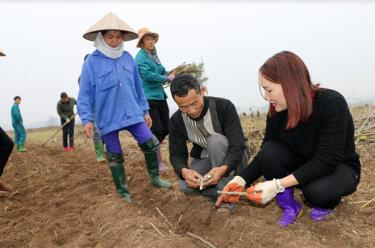 Cán bộ kỹ thuật hướng dẫn người dân trồng cây dâu đúng cách.