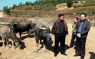 Lãnh đạo Chi cục Chăn nuôi và Thú y tỉnh kiểm tra công tác phòng chống dịch bệnh cho đàn gia súc tại xã Púng Luông, huyện Mù Cang Chải