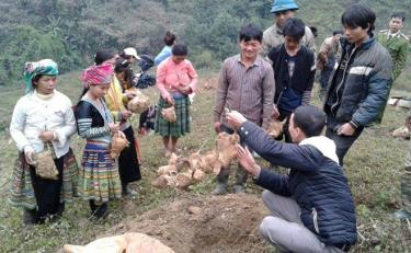 """Agricultural extension staff instructs farmers from Mong ethnic minority group on """"Bat do"""" bamboo shoot growing technique."""