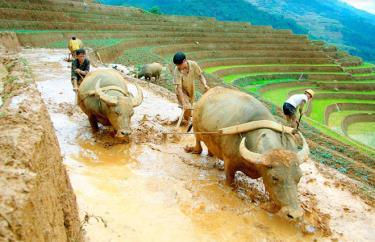 Người dân huyện Mù Cang Chải làm đất gieo cấy vụ xuân.