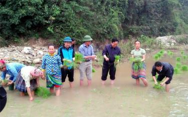 Các đồng chí lãnh đạo huyện và xã Pá Lau xuống đồng cùng nhân dân cấy lúa xuân.