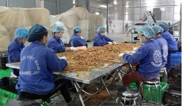 Công nhân Hợp tác xã Quế hồi Việt Nam tại xã Đào Thịnh sản xuất sản phẩm quế điếu thuốc.