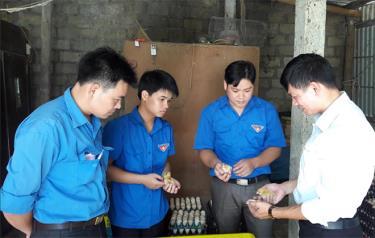 Một mô hình chăn nuôi gà mang lại hiệu quả kinh tế cao của đoàn viên thanh niên huyện Lục Yên.