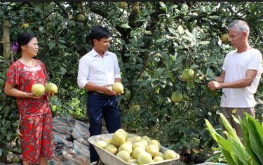 Huyện Yên Bình phấn đấu có sản phẩm bưởi Đại Minh đạt tiêu chuẩn 5 sao trong giai đoạn 2020 - 2021.