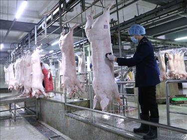 Nhân viên Thú y đóng dấu kiểm dịch lên sản phẩm thịt lợn tại dây chuyền giết mổ lợn ở nhà máy của Công ty Cổ phần Công nghệ thực phẩm Vinh Anh, huyện Thường Tín.