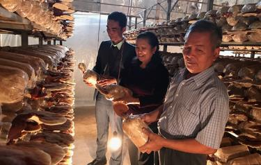 Lãnh đạo xã Việt Thành, huyện Trấn Yên đến thăm và kiểm tra mô hình kinh tế tổng hợp và trồng nấm Linh Chi của gia đình ông Nguyễn Văn Quỳnh, thôn Phú Lan cho thu nhập trên 250 triệu đồng/năm.