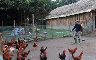Gia đình ông Nguyễn Bá Sơn, thôn Yên Hòa, xã Yên Hợp thường xuyên phun tiêu độc khử trùng để phòng dịch bệnh cho đàn gà.