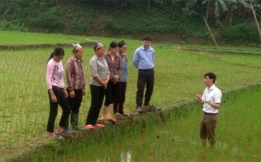 Cán bộ khuyến nông huyện Yên Bình hướng dẫn nông dân kỹ thuật chăm sóc lúa xuân.