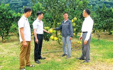 Trồng cây ăn quả có múi đang mang lại thu nhập cao cho nông dân xã Lâm Giang.