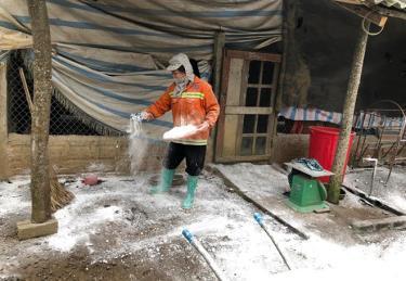 Sau khi xuất chuồng, ông Lê Văn Hùng ở tổ 1, thị trấn Yên Bình đều vệ sinh chuồng trại, khử trùng, để trống chuồng sau một tuần mới nuôi lại.