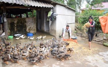 Cán bộ Trung tâm Khuyến nông tỉnh (bên trái) trực tiếp sâu sát, hướng dẫn kỹ thuật cho hộ gia đình tham gia mô hình chăn nuôi vịt bầu Lâm Thượng an toàn dịch bệnh ở xã Việt Hồng, huyện Trấn Yên.