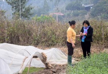 Khuyến nông viên xã Văn Phú, thành phố Yên Bái trao đổi với người dân cách phòng chống rét cho mạ vụ xuân.