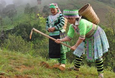 Nhân dân Trạm Tấu tích cực trồng rừng phủ xanh đất trống đồi núi trọc.
