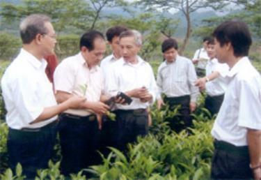 Các đại biểu dự hội thảo tham quan diện tích chè Shan tuyết do Công ty Lâm nghiệp Văn Chấn trồng tại xã Nậm Búng.