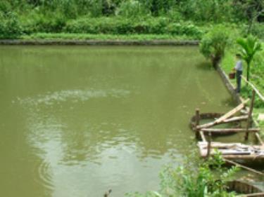 Nghề nuôi cá được nhiều hộ gia đình trong xã đầu tư phát triển.