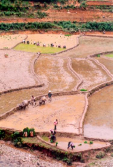 Nông dân huyện  Mù Cang Chải đang gieo cấy vụ mùa.